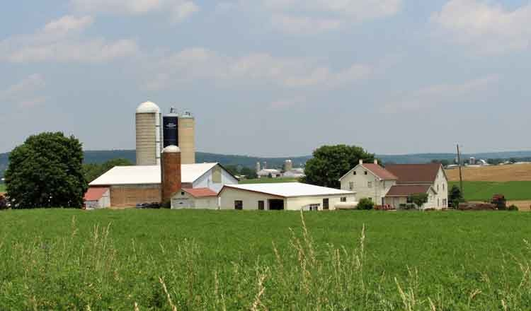 Lodging at Lancaster County dairy farm