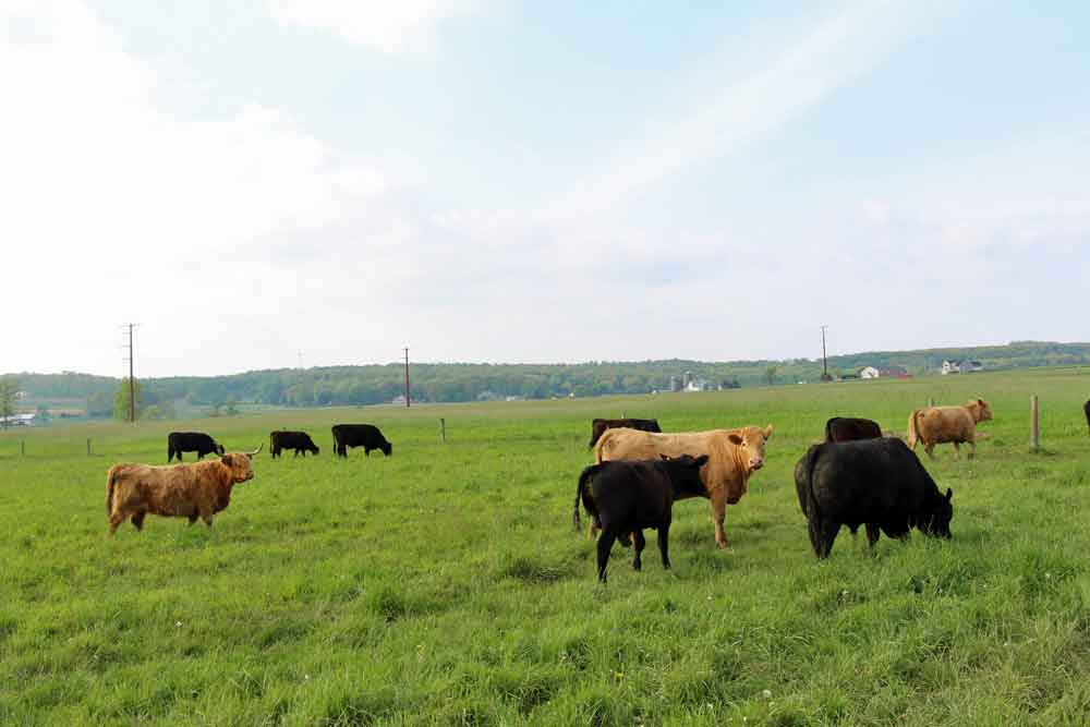 Stay on a farm in Lancaster PA