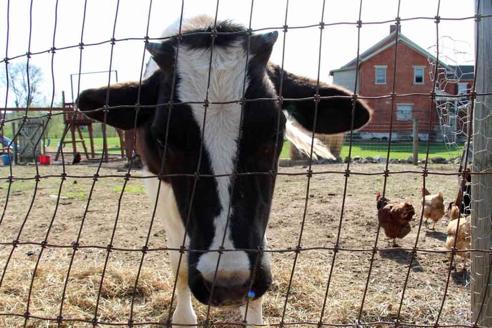 Lancaster PA Farm B&B